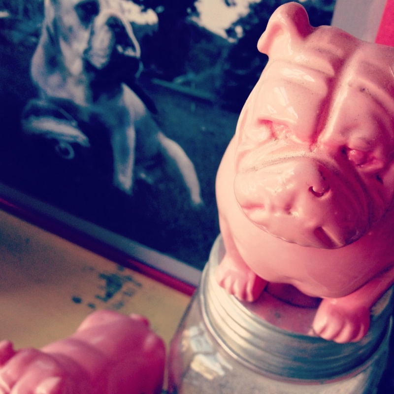 pink-bulldog-guard-mason-jar-display